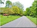 SW4431 : Spring colours at Trengwainton Gardens, near Penzance by Derek Voller