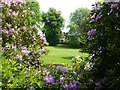 SO8698 : Rhododendron flowers by Philip Halling