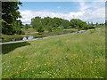 TQ4485 : Wildflower meadow in Barking Park by Marathon