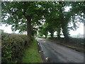 SJ7974 : Chelford Lane by JThomas
