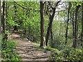 SE2438 : Footpath through Daffy Wood below the railway by Stephen Craven