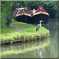 SP8831 : Heron along the Grand Union Canal by Mat Fascione
