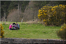 NH6037 : Highland : Caledonian Canalbank by Lewis Clarke