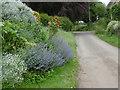 SK8402 : Flowers in a front garden in Church Lane, Ridlington by Marathon