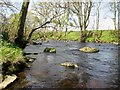 SE2061 : River  Nidd  from  watersedge by Martin Dawes