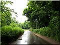 TL9281 : C147 Rushford Road, Rushford by Adrian Cable