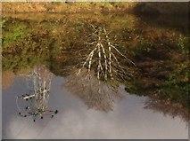 B8221 : Lub an Chlochain Bhig, Croithlí by Ciaran Mac Murchaidh