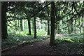 SJ0478 : The Woodland at Bodrhyddan by Jeff Buck