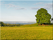 NH5966 : Field overlooking the Cromarty Firth by valenta