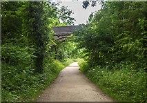 SK1750 : Tissington Trail by Peter McDermott