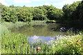 ST1899 : Pond, margin of Plateau 4, Oakdale Business Park by M J Roscoe