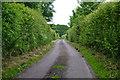 SZ3396 : Snooks Lane, close to Snooks Farm by David Martin