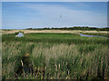 TF7444 : Reedbed at Titchwell RSPB reserve by Hugh Venables