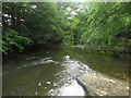 NZ2379 : The River Blyth at Plessey Woods Country Park by Graham Robson