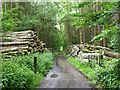 NZ0387 : Forest track and wood pile by Russel Wills