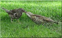 NT2473 : Feeding Time by Anne Burgess
