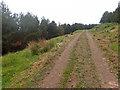NM4519 : Forest track by Mick Garratt