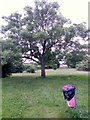SZ0696 : Kinson: tree in open space behind Baker Road by Chris Downer