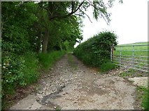 NY2437 : Track to disused quarries, north of Uldale by Christine Johnstone