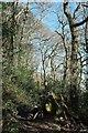 SX1256 : Fallen tree, West Wood by Derek Harper