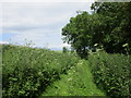 SE8858 : Green Lane by Jonathan Thacker