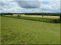 SO8843 : Farmland near Dunstall Farm by Philip Halling