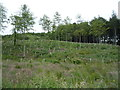 NU1517 : Shipley Wood by JThomas