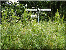 TL9678 : Roadsign on Fen Street by Adrian Cable