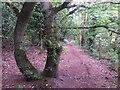 SZ0793 : Talbot Village: footpath N12 heads west by Chris Downer