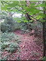 SZ0794 : Talbot Village: footpath N13 is just discernible by Chris Downer