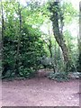 SZ0793 : Talbot Village: footpath N42 from Slades Lane by Chris Downer