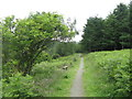 NT4036 : Path and seat at Thornielee by M J Richardson