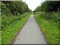 TA1946 : Hornsea Rail Trail #23 by Steve  Fareham