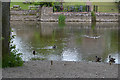 NY4624 : Ducks and the River Eamont, Pooley Bridge by Nigel Brown