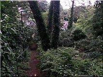 SZ0895 : Redhill: descent into woodland on footpath O19 by Chris Downer