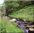SK2680 : Burbage Brook by Stephen Burton