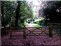 SZ0794 : Talbot Village: into the woods on footpath N16 by Chris Downer