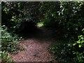 SZ0794 : Talbot Village: footpath N16 goes through some foliage by Chris Downer