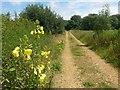 SZ0596 : Bear Cross: yellow flowers alongside footpath E07 by Chris Downer