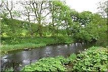 SD7152 : The River Hodder in Slaidburn by Steve Daniels
