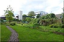 SE6250 : Provost's Garden by DS Pugh