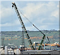 J3677 : Green crane, Belfast harbour (May 2016) by Albert Bridge