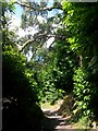 SZ0790 : Westbourne: under large branches on footpath A06 by Chris Downer