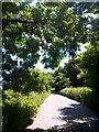 SZ1096 : Throop: footpath M15 under beech leaves by Chris Downer