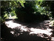 SZ0995 : Muscliff: steps onto footpath M15 by Chris Downer
