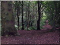 SJ5566 : Footpath to Abbeywood by Jeff Buck