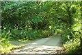 SW8742 : Lane at Lamorran by Derek Harper