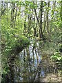 TQ3399 : Turkey Brook on the east side of Whitewebbs Park by Mike Quinn
