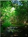 TQ1719 : Hookshile Wood by Simon Carey