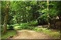 SU1616 : Track, Castle Hill by Derek Harper